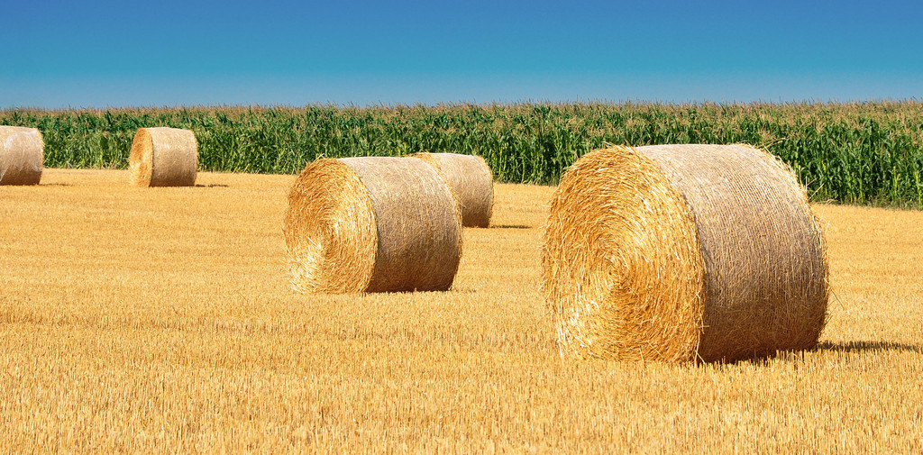 Straw bales on a field.